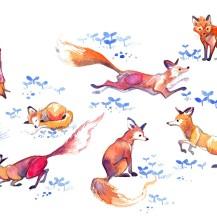 foxstudy copy